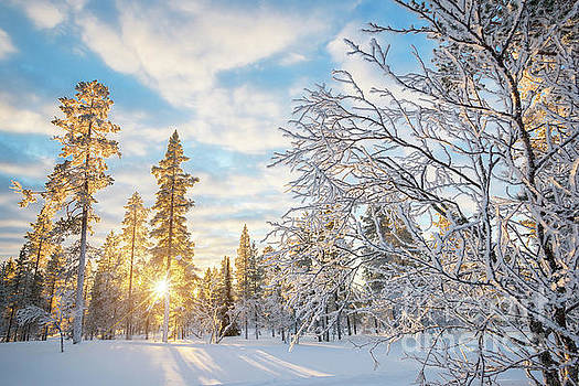 Snowy landscape at sunset by Delphimages Photo Creations