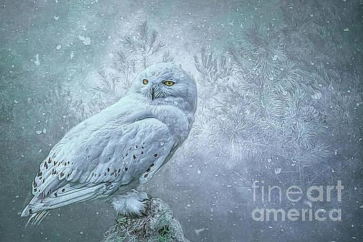 Snowy Owl in winter by Brian Tarr
