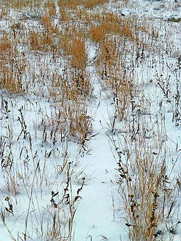 Snowy Path by Cris Fulton