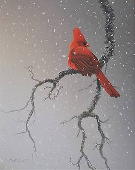 Snowy Perch by Peter Mathios