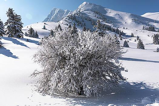 Snowy Tree in Kalavryta Mountains by Lenochka Blonsky