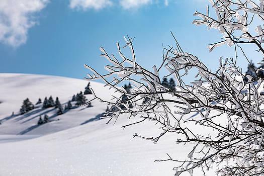 Snowy Trees by Lenochka Blonsky