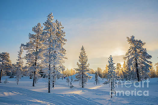 Snowy winter landscape by Delphimages Photo Creations