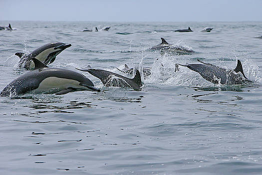 So Many Dolphin by Shoal Hollingsworth