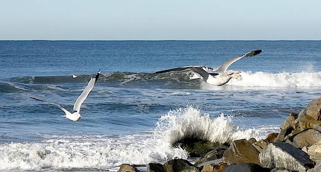 Soaring Seagulls  by Jan Cipolla