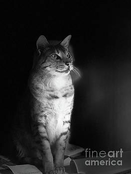Society Cat by Jenny Revitz Soper