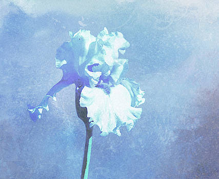 Soft Blue Iris by Linda Cox