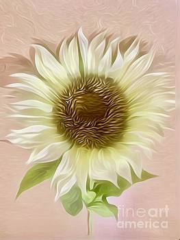 Soft Sunflower  by Jeannie Rhode