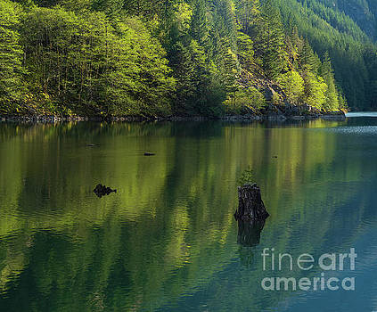 Solitary Tree Forest Reflections by Mike Reid