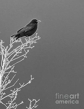 Something To Crow About by Sharon Mayhak