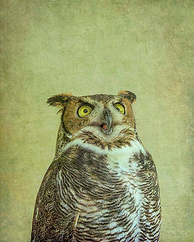 Something to Say - Great Horned Owl by Mitch Spence