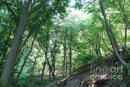 Sommer Wald - Summer Forest by Eva-Maria Di Bella