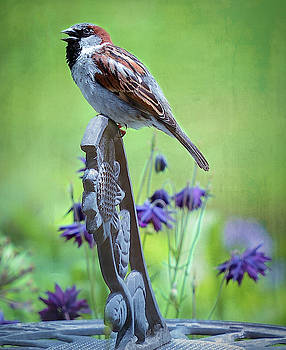 Song Bird Serenade by Mary Lynn Giacomini