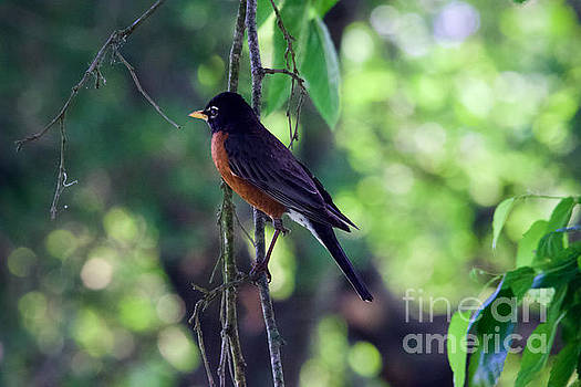 Songbird Morning by Rachel Morrison