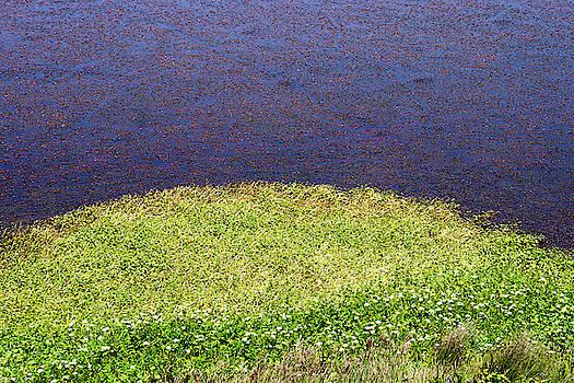 Sonoma Coast AL_697_18 by Tari Kerss