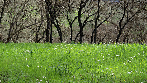 Sonoma Valley RP_1148_18 by Tari Kerss