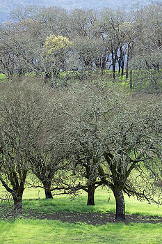 Sonoma Valley RP_1439_18 by Tari Kerss