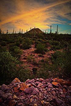 Chance Kafka - Sonoran Desert Sunset