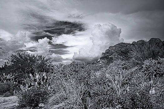 Sonoran Monsoon Season m1603 by Mark Myhaver