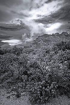 Sonoran Monsoon Season m1649 by Mark Myhaver