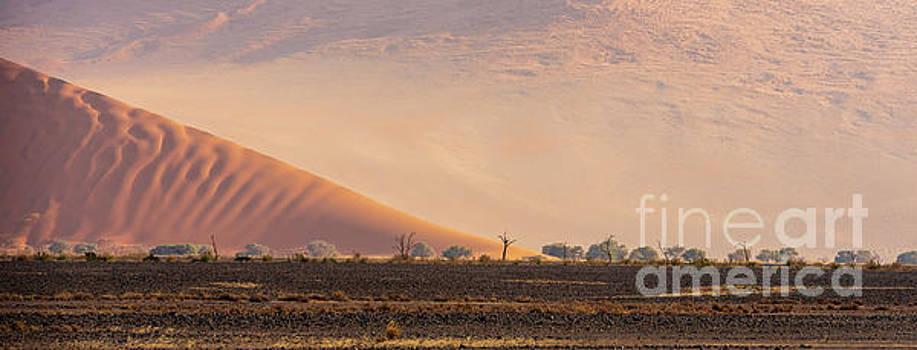 Sossusvlei Dunes and Trees by Mike Reid