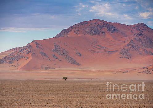 Sossusvlei Namibia Solitary Tree by Mike Reid
