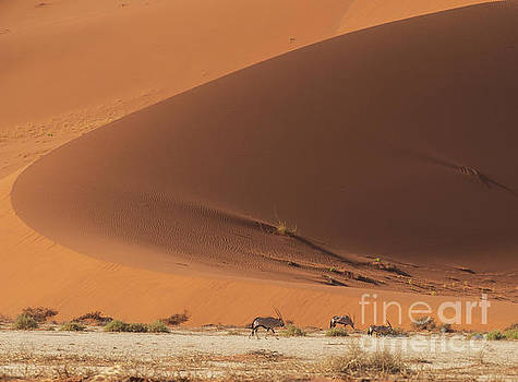 Sossusvlei the Oryx and the Curve by Mike Reid