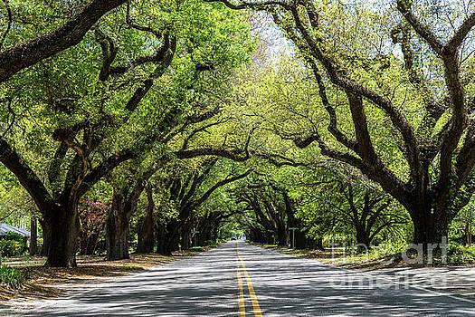 South Boundary Ave Aiken SC by Sanjeev Singhal