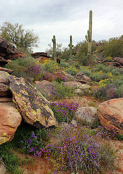 South Mountain Wildflowers by David T Wilkinson