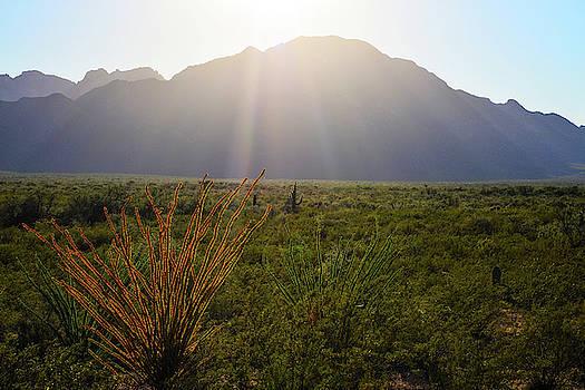 Chance Kafka - Southwestern Sunlight