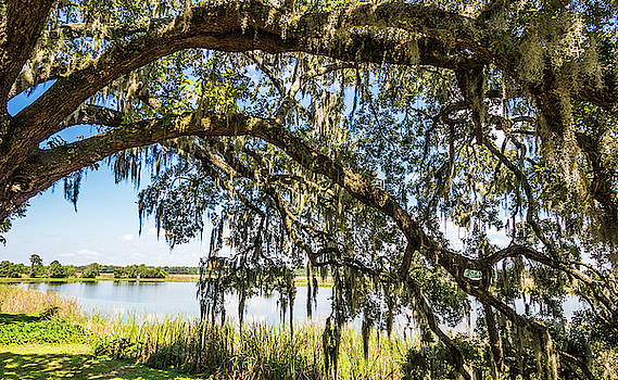 Spanish Moss Tree And A Pond by Jordan Hill