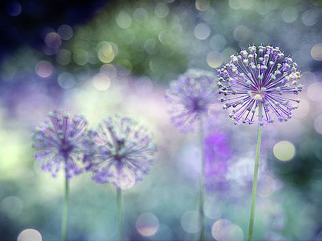 Sparkely by Rebecca Cozart