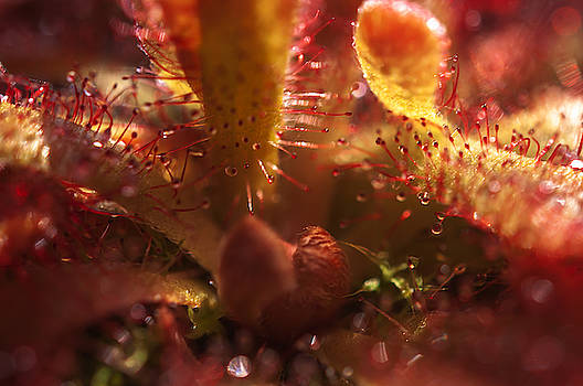 Sparkling Alien Worlds of Alice Sundew 3 by Jenny Rainbow