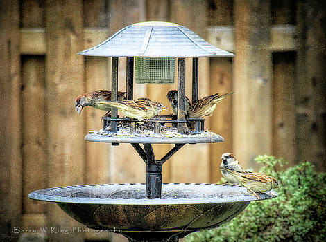 Sparrows At The Feeder by Barry W King