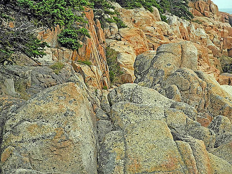 Speckled Boulders Overgrown by Conifers at Bass Harbor by Lynda Lehmann