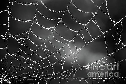 Spider web black and white by Delphimages Photo Creations