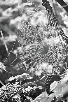 Spiderweb in Morning Dew by Kristi Beers-Mason