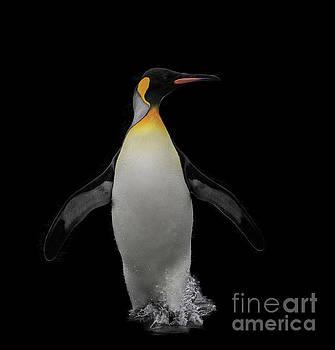 Splashing penquin by Patti Schulze