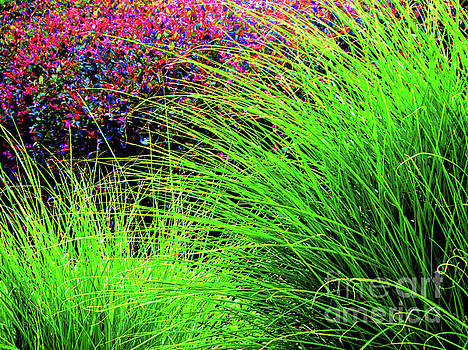 Splendor In The Grass by Gardening Perfection