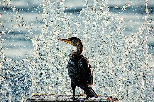 Splish Splash by Natalie Simon-Joens