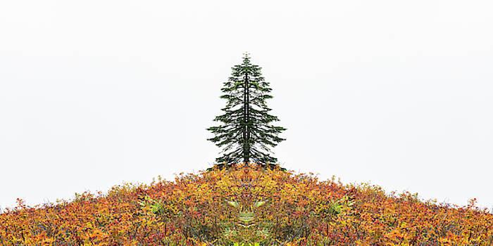 Pelo Blanco Photo - Split Tree
