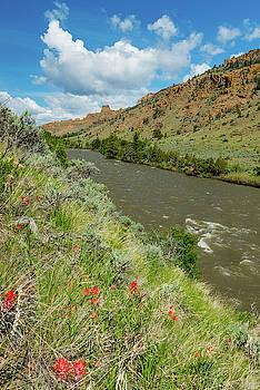 Spring Along the Shoshone by Barbara Hayton