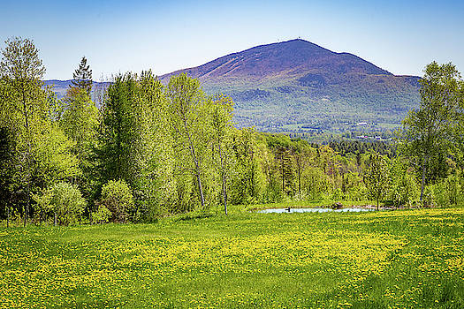 Spring and Burke by Tim Kirchoff