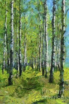 Spring Birch Forest by Dragica Micki Fortuna