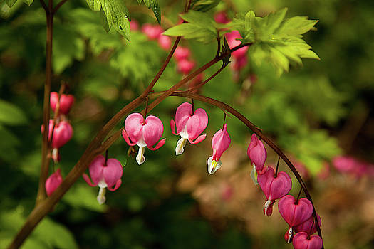 Spring Blooms Hearts by Karol Livote