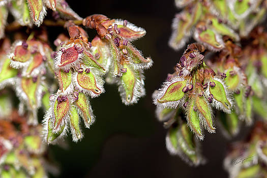 Spring Buds by Erich Grant