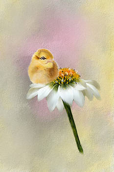Spring Chick by Mary Timman
