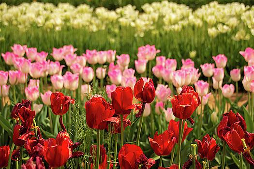 Kristia Adams - Spring Colors