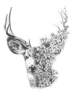 Spring Deer by Thomas Stanford