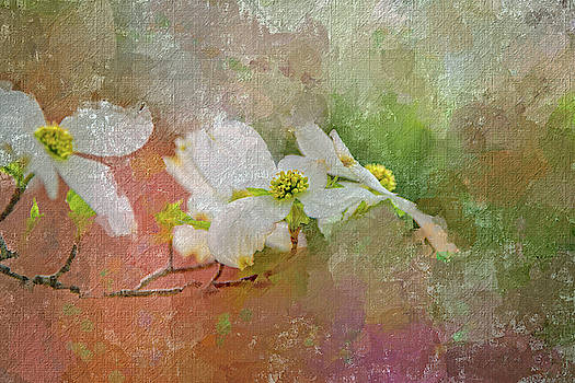 Spring Dogwood by Mary Timman